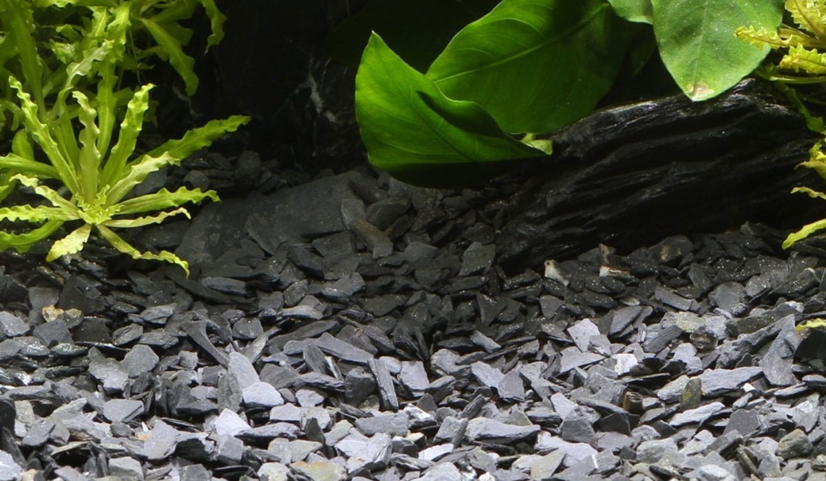 Filtration graviers aquarium