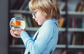 Etude de la dureté de l'eau d'un aquarium