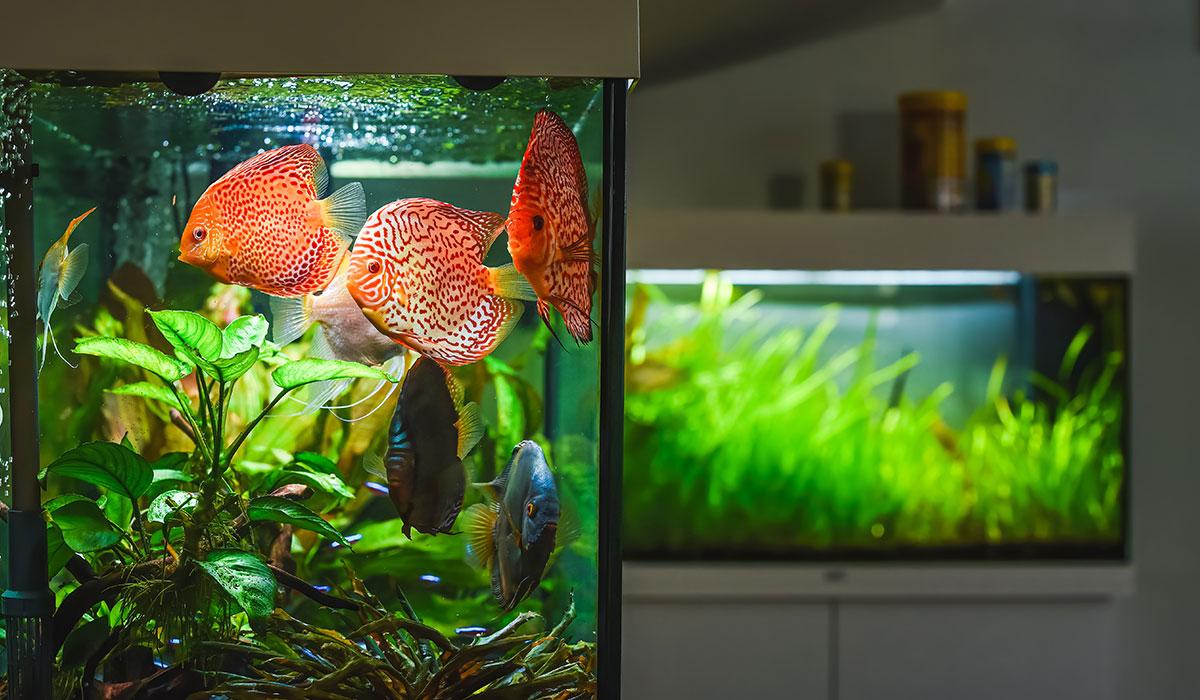 filtration mécanique de l'aquarium