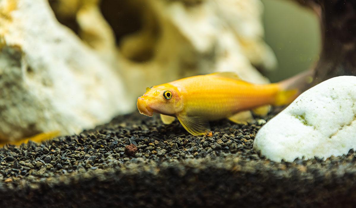 Graviers sol aquarium