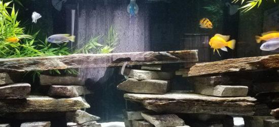 Pompe de filtration d'aquarium